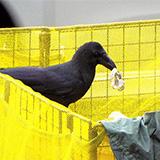 鳥の種類によって異なる被害と適切なネットの選び方
